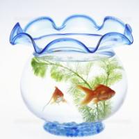 金魚と水草を一緒に育てるための考え方と知識