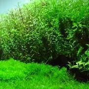 水草レイアウト