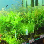 水草を元気に育てる為に知っておきたい水草育成の基礎