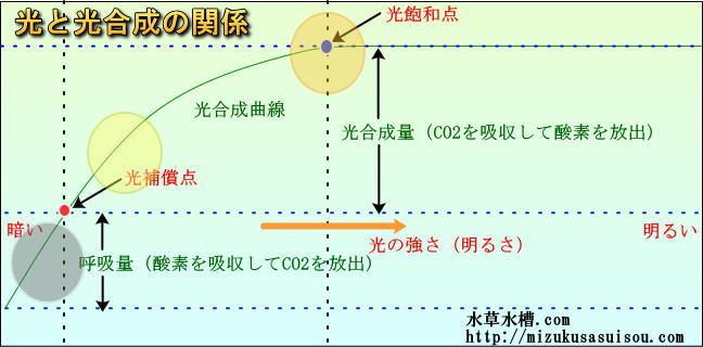 光と光合成の関係