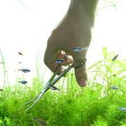 水草カットの仕方・水草のトリミング方法とメンテナンス
