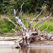 自然の中の流木
