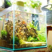 水草育成の水温管理