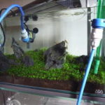 水槽水換えの最適な周期・頻度・量