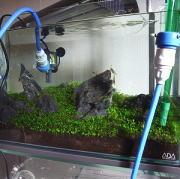 水槽の水換え作業