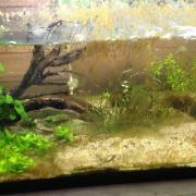 水槽のガラス面に付着する3種類のコケ(藻)それぞれの原因と対策