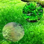 苔ブーム到来!嫌われるコケ(藻)と好かれる苔