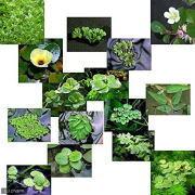 色々な浮き草