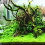 自然な感じの水草水槽レイアウトを作る三大要素・初心者でもすぐできるレイアウトのコツ