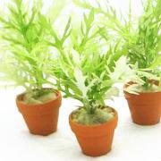 ミニ素焼き鉢の水草
