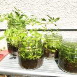 究極に簡単な水草ボトルアクアリウム