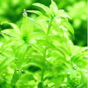 元気よく生長する水草