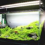 水草が育つLEDライトの選び方とおすすめLED照明
