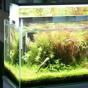 LED照明と水草
