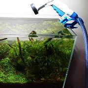 水槽の水換え・掃除頻度を減らす 水草水槽の水質維持