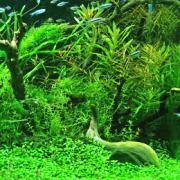 水草の正しい植え方から水草水槽のレイアウト方法・トリミング