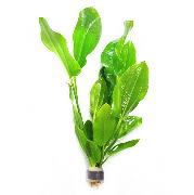 鉛巻き水草の植え方 おもりとして使われている鉛はそのままでは害!?
