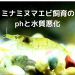 ミナミヌマエビ飼育のphと水質悪化
