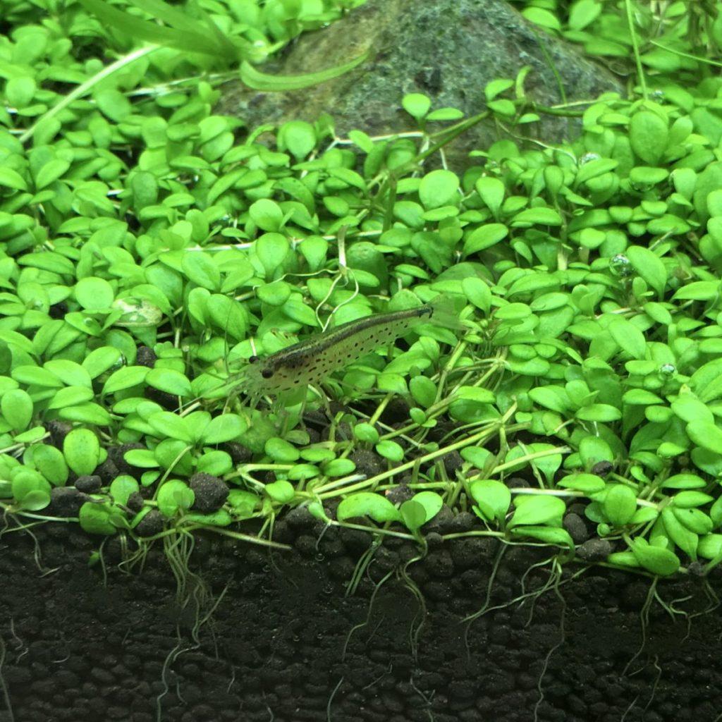 水草水草のソイル