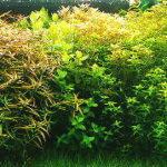 水草の肥料は100均の園芸用植物肥料では代用できない理由