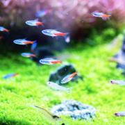バクテリアが繁殖した水槽