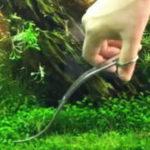 前景草のトリミング方法とタイミング 掃除とコケ対策