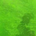 硝子面に付着する緑色のコケ
