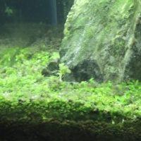 木酢液やオキシドールのコケ除去と合わせてやるべき水草水槽のコケ対策
