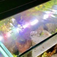 水槽の油膜